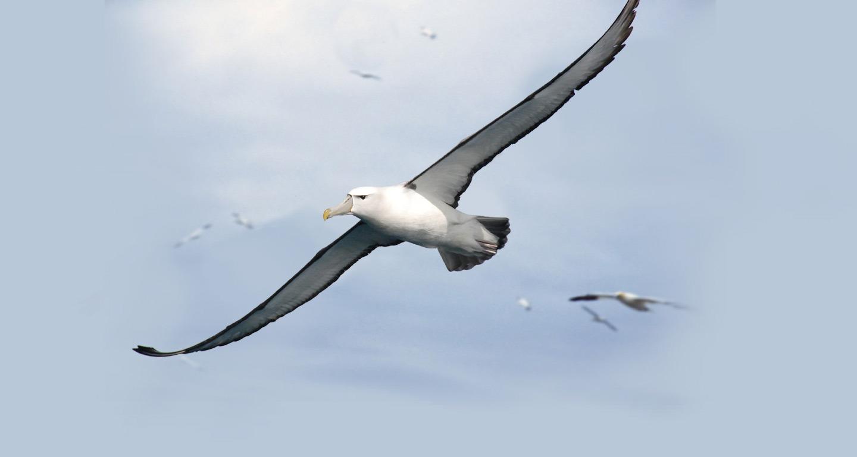 Mintco Financial About Us Albatros Bir
